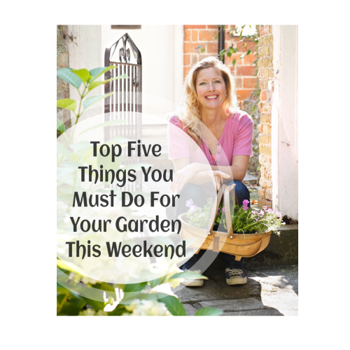 Top 5 Garden Tips and Tricks To Do In February